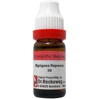 Epigaea Repens 30 11 ml